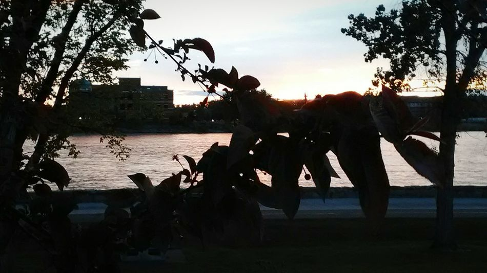 no filters wse all natural only with a cell phone. Tree Water Sunset Silhouette Nature Outdoors Sky Missouri River Great Falls Montana Live For The Story EyeEmNewHere
