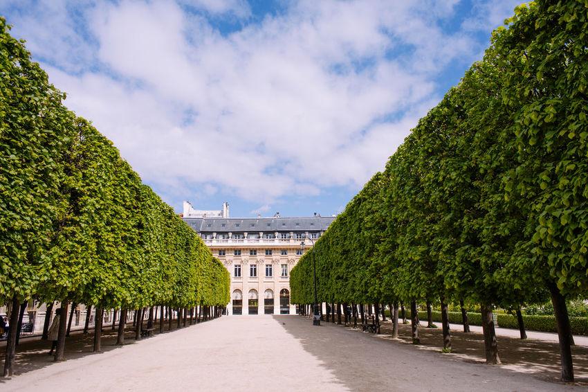 Palais Royal Architecture Cloud - Sky France Nature Outdoors Palais Royal Paris Spring Travel Travel Destinations Tree
