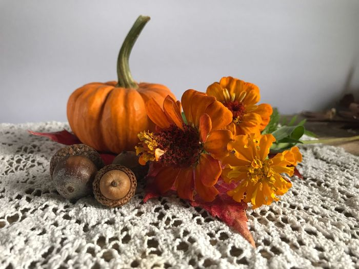 Autumn still life Autumn colors Autumn StillLifePhotography Still Life Acorns Zinnia  EyeEm Selects Pumpkin Flower Freshness Orange Color No People Petal Indoors  Close-up Flower Head