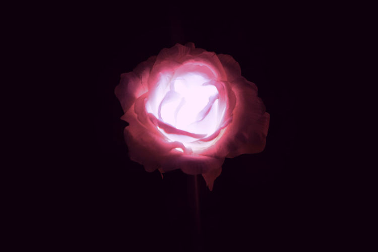 AI Now Lights Red Artificial Black Blooming Rosé White