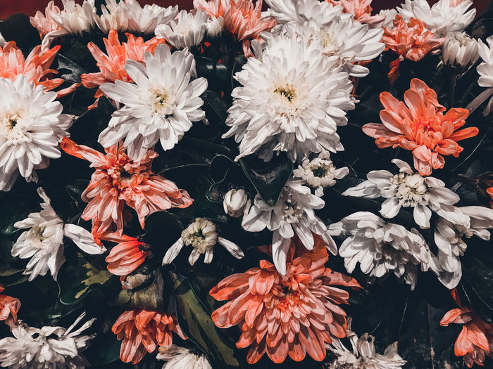 Beauty In Nature Close-up Day Flower Flower Head Flowers Fragility Freshness Growth Nature No People Outdoors Petal Plant Roses Rosé Spring Spring Flowers