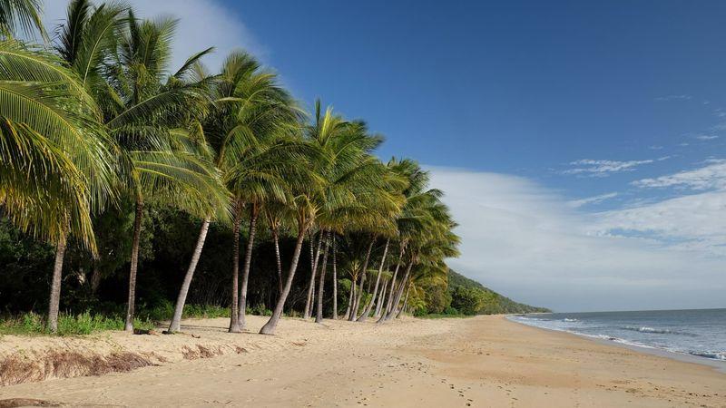 Beach Sand Palm Tree Sea Nature Tropical Climate Beauty In Nature Outdoors No People Blue Sky Landscape Australia