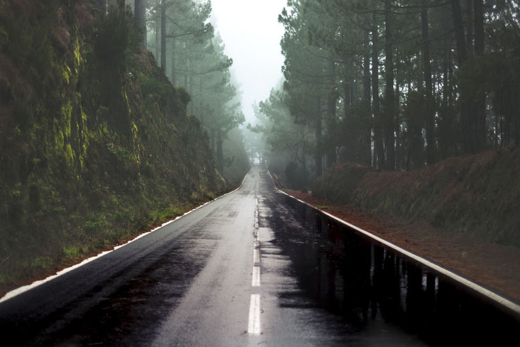 Long way road in the rain at the mountain with pines forest and fog clouds in front and grey clear sky - ground point of view with black asphalt and white lines - driving and travel concept Tree Direction The Way Forward Plant No People Transportation Diminishing Perspective Road Nature Day Forest Tranquility Tranquil Scene Beauty In Nature Non-urban Scene Scenics - Nature Connection Outdoors Land Railing Long Raining Solitude Fog Long Way To Go... Pines Forest Bad Weather Asphalt Road Mountain El Teide National Parc Landscape Horizontal Backgrounds