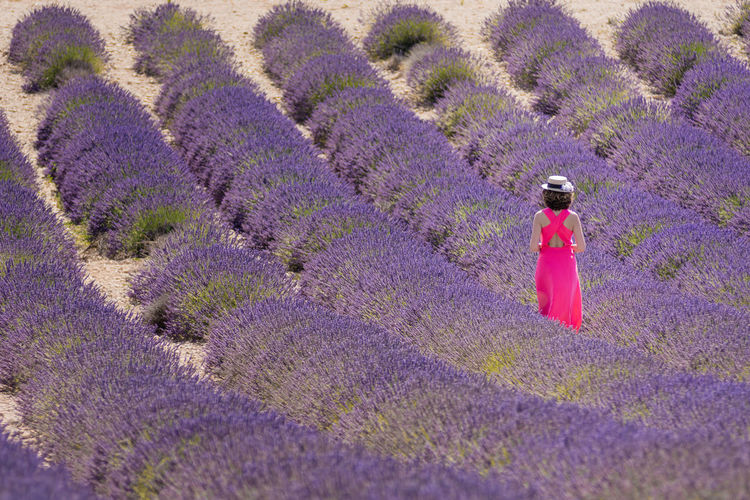 Woman in pink dress walking out of lavender field Agriculture Beauty In Nature Day Fashion Field Flower Growth Lavender Lavender Field Lavender Purple Lavenderflower Nature One Person Outdoors People Pink Color Provence Purple South Of France Summer Mood The Great Outdoors - 2017 EyeEm Awards Valensole Woman In Pink Dress