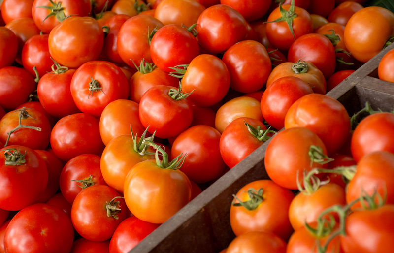 Group of red tomatoes background in tray village market agriculture farm full of organic/selective focus Abundance Backgrounds Close-up Day Farmer's Market Food Food And Drink Freshness Fruit Healthy Eating Large Group Of Objects Market No People Organic Outdoors Red Retail  Ripe Sale Still Life Tomato Vegetable Wellbeing