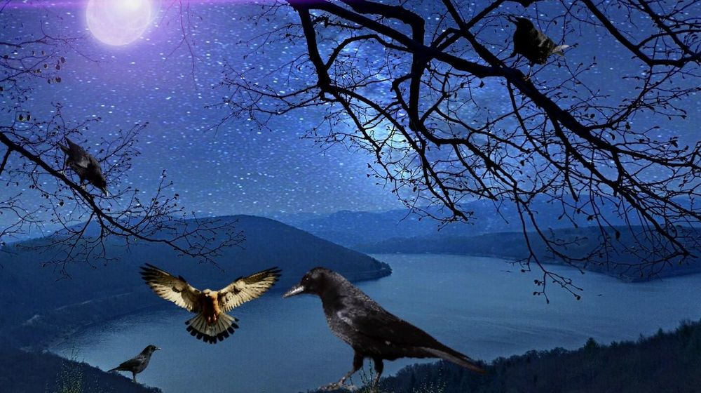 Starry Night at the Edersee :) Edersee Germany Edersee Sperrmauer Nature On Your Doorstep .Nature. Collage Art Animals In The Wild Spread Wings Animal Wildlife Flying Bird One Animal Animal Themes Night Outdoors Nature Beauty In Nature No People EyeEmNewHere
