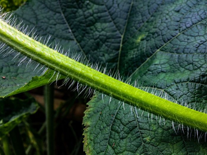 Pumpkin Green Color EyeEm Nature Lover EyeEmNewHere Green Color Plant Leaf Plant Part Nature No People One Animal Close-up Animal Themes Growth Animal Beauty In Nature Animals In The Wild Day Outdoors Focus On Foreground Drop Wet Insect