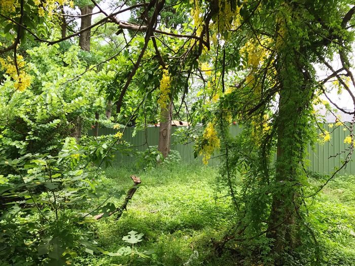 Tree Green Color Growth Nature Outdoors Day No People Branch Tree Trunk Grass Beauty In Nature