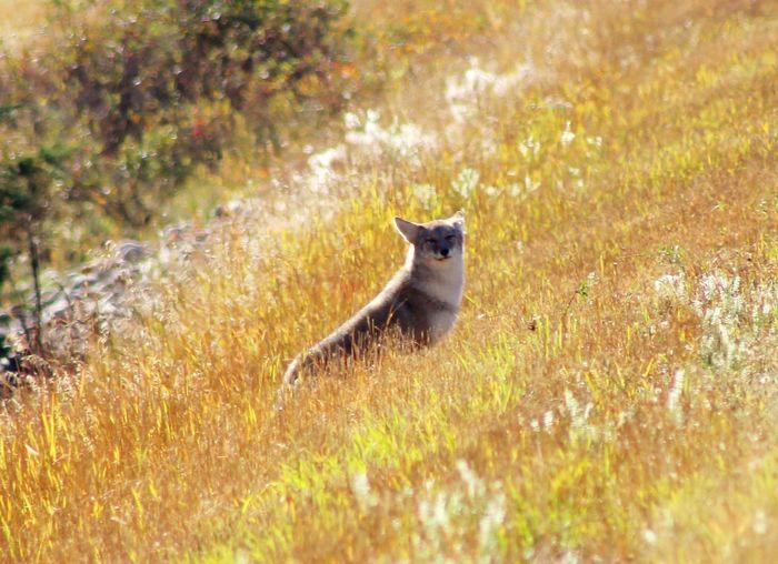 Portrait of cat sitting on land