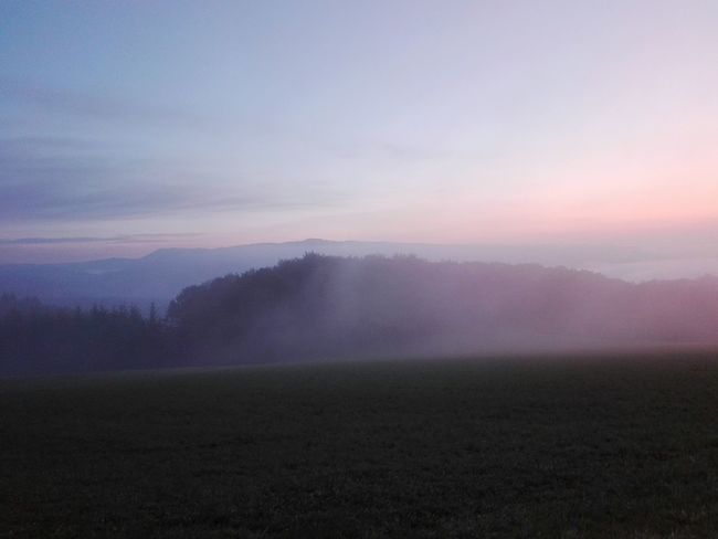 Fog Tree Landscape Nature Field Agriculture Scenics Morning No People Rural Scene Tranquil Scene Beauty In Nature Dawn Tranquility Outdoors Cold Temperature Freshness Day Sky Fragility Nature Landscape