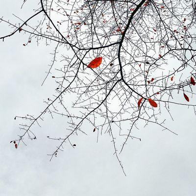 Autumn Tactics, Shadows of falling Leaves Simplicity Orange Nature Autumn Twisted Dailydose Leaves Autumncolors Autumnsky