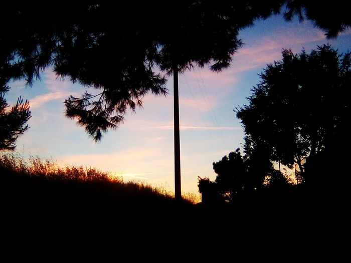Nature No People Sky Alberi 🌲 Pinetosultramonto Sunset Tramontoacolori Beauty In Nature Sunsetlovers