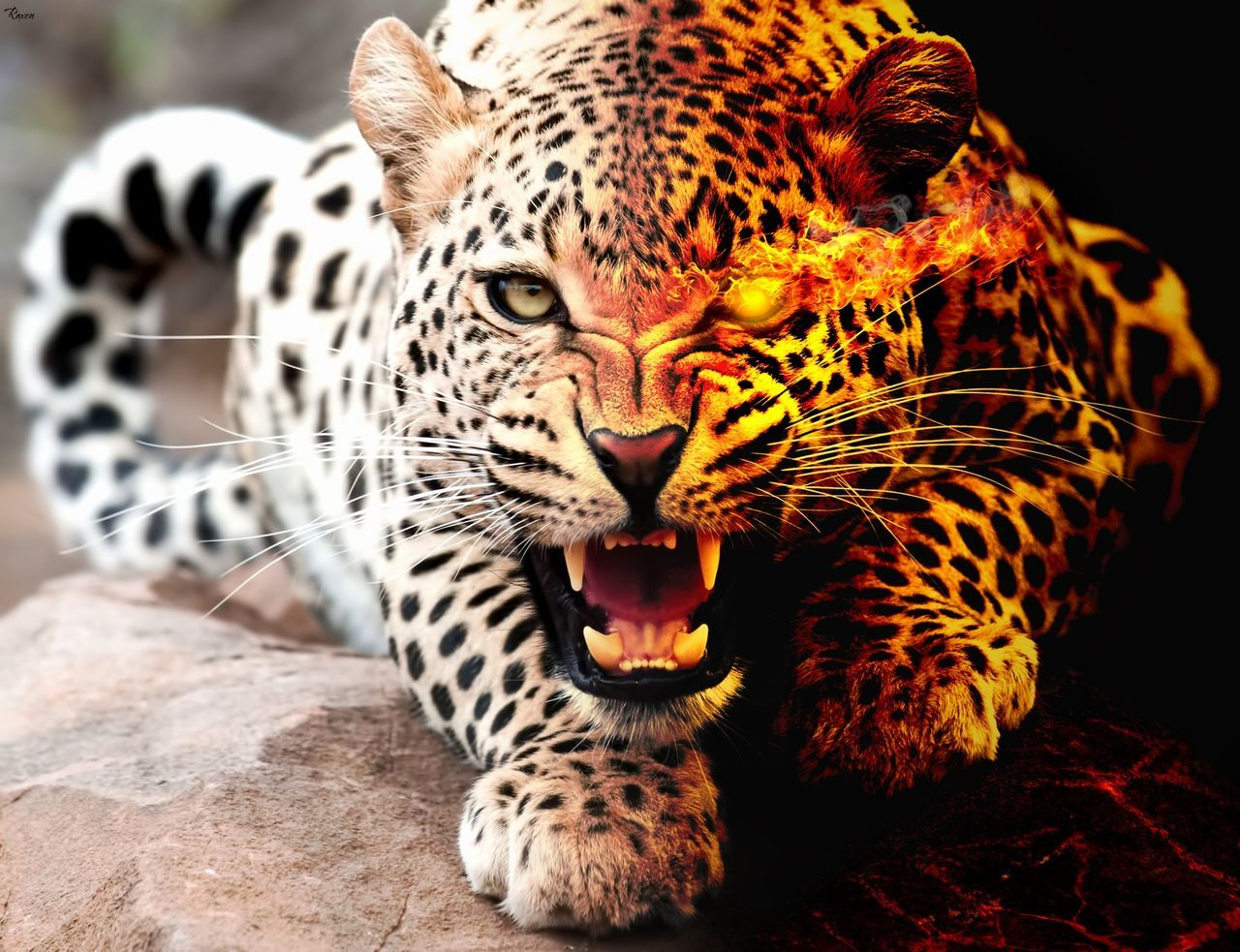 one animal, animals in the wild, animal themes, mammal, animal wildlife, leopard, mouth open, nature, feline, day, animal markings, outdoors, no people, safari animals, tiger, close-up