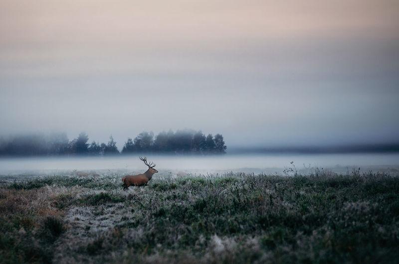 Deer on countryside landscape