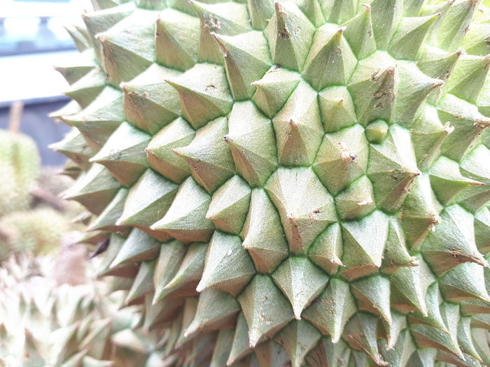 Full Frame Cactus Close-up Thorn Saguaro Cactus Aloe Vera Plant Thistle Needle - Plant Part Aloe Tucson Prickly Pear Cactus Spiked Barrel Cactus Succulent Plant Sharp Natural Pattern Spiky Repetition Growing Pine Tree Pine Cone