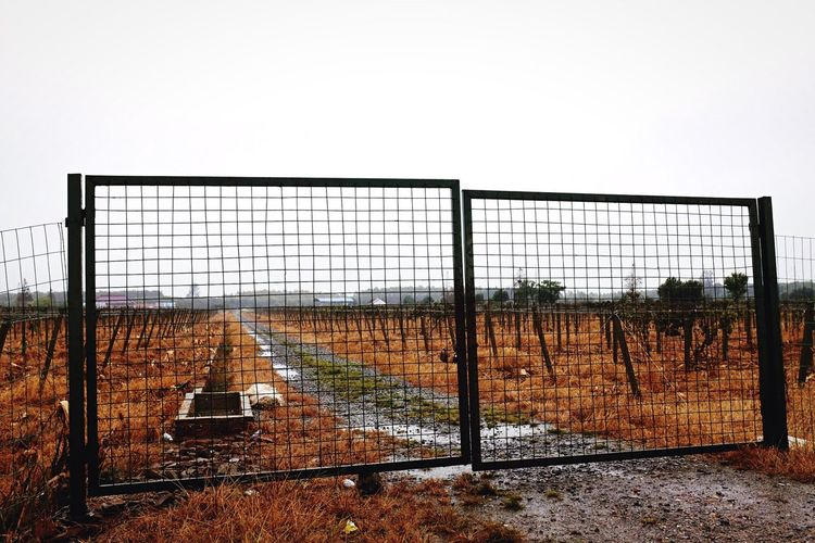 Closed gate on dirt road at vineyard against clear sky