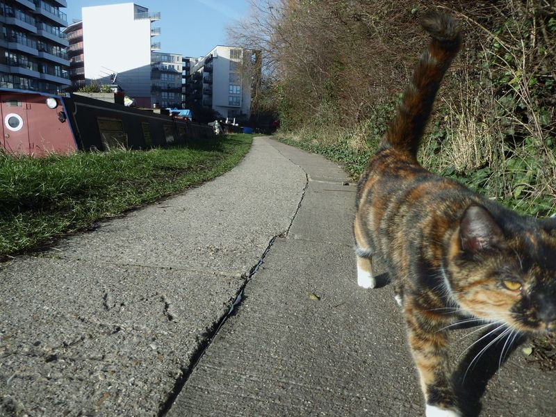 A stray Cat prowls the Towpath along the Canals of East London Cats Cats Of EyeEm Towpath Photography Canal Animal Themes Building Exterior Tree One Animal Domestic Animals Pets Outdoors Architecture Day City Stray Cat Path Boat Narrowboat Adapted To The City No People EyeEmNewHere
