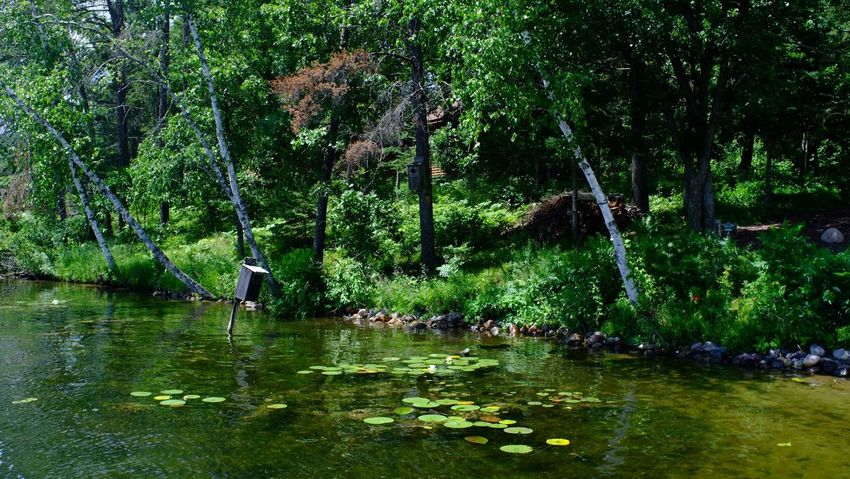 Lake Country Minnesota Beauty In Nature Day Forest Green Color Growth Nature No People Outdoors Pequot Lakes River Scenics Tranquil Scene Tranquility Tree Water