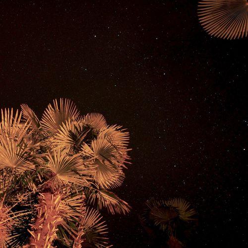 Astronomy Galaxy Night No People Outdoors Palm Tree Palm Trees Sky Star - Space Tree