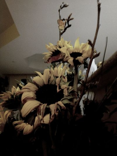 Yes, sunflowers again.
