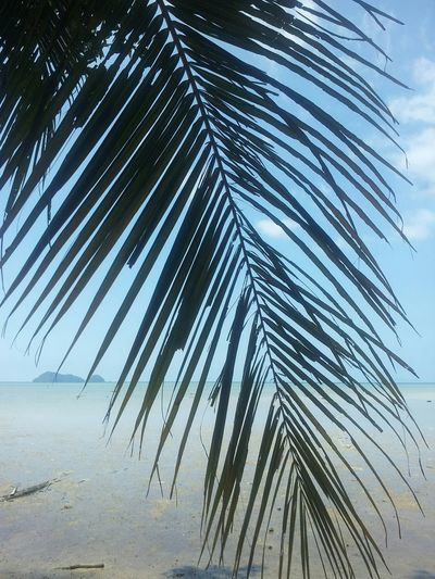 Thailand! Ocean View Palm Trees Photography EyeEm Best Shots Thailand Trip EyeEmBestPics