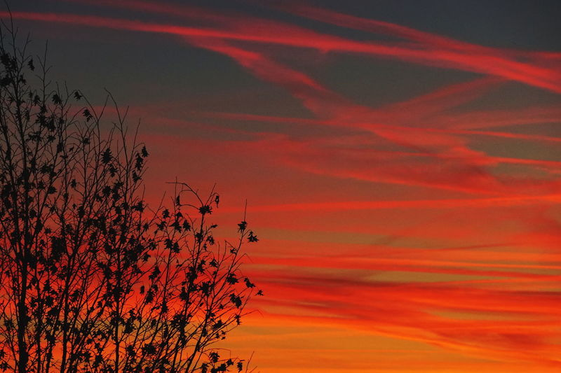 Weather Beauty In Nature Cloud - Sky Dramatic Sky Nature Orange Color Red Scenics - Nature Silhouette Sky Sunset Tree