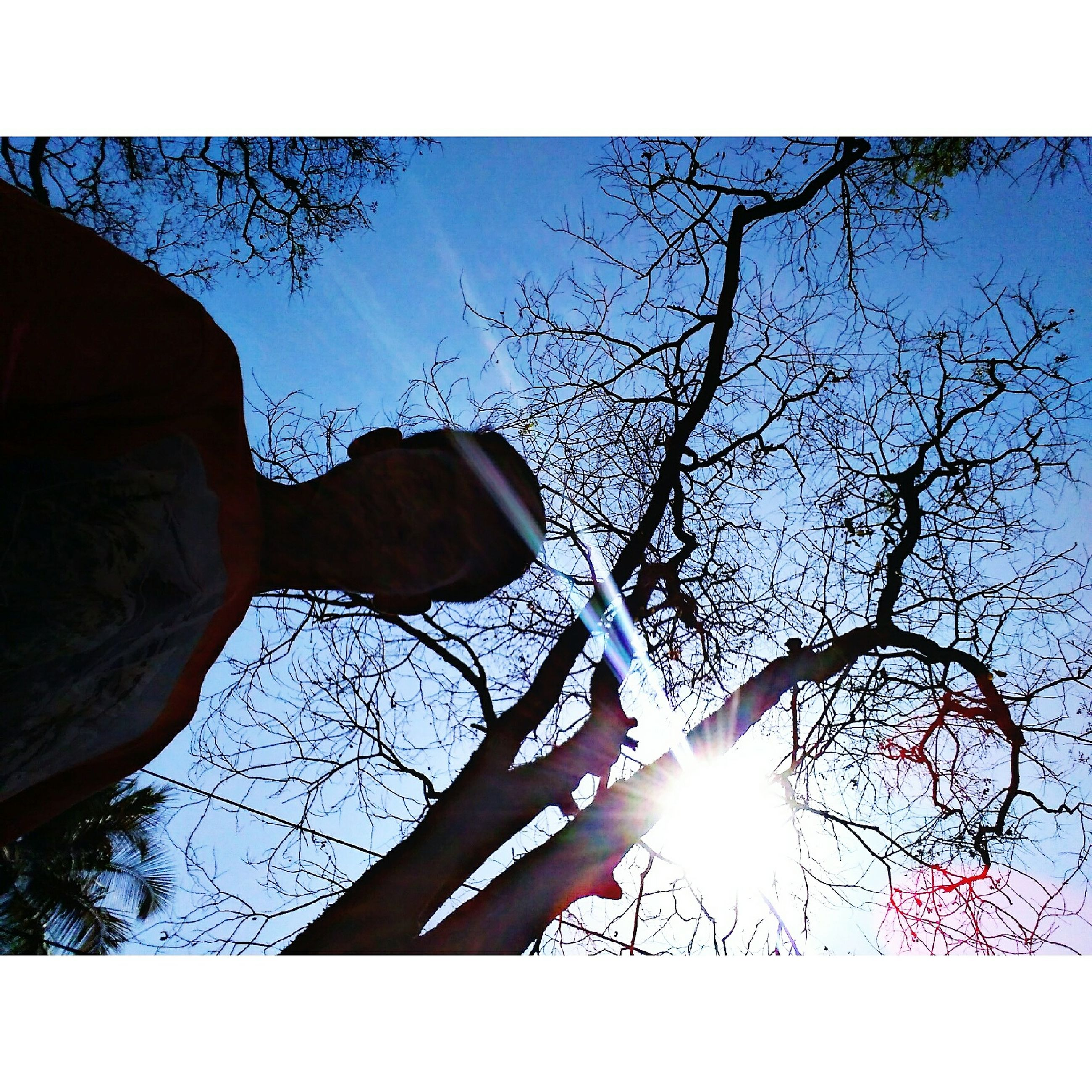 sunlight, lens flare, tree, sun, bare tree, sunbeam, one person, branch, outdoors, human hand, real people, day, low angle view, sky, clear sky, built structure, building exterior, nature, human body part, architecture, close-up, people