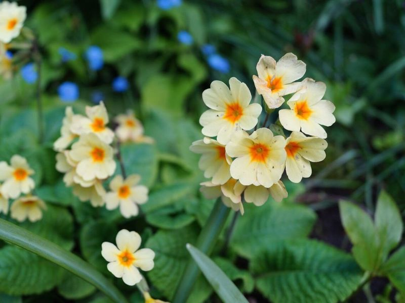 Flower Petal Freshness Fragility Nature Beauty In Nature Flower Head Growth Blooming Plant Outdoors Close-up Day No People Yellow Leaf