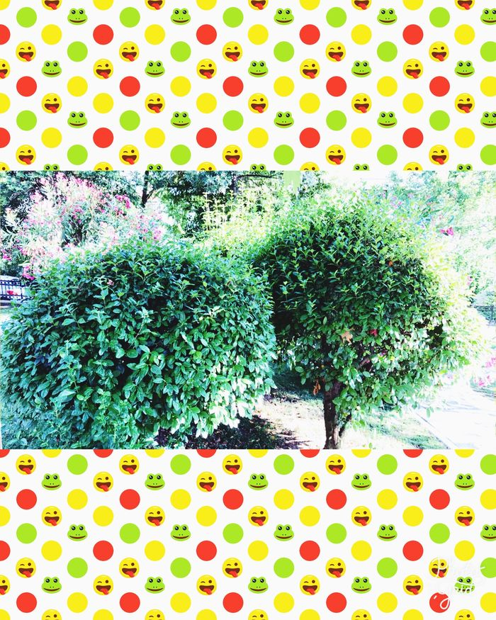 Variation Frame Multi Colored Green Color Growth Plant No People Tree Day Nature Beauty In Nature Close-up Park - Man Made Space Tranquil Scene Freshness Fragility Plant ❤ Tranquility Grass Leaf Outdoors Summertime ♥ Fun
