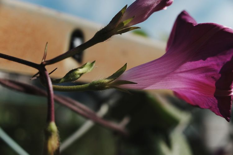 EyeEm Selects Flower Insect Close-up Animal Themes Sky