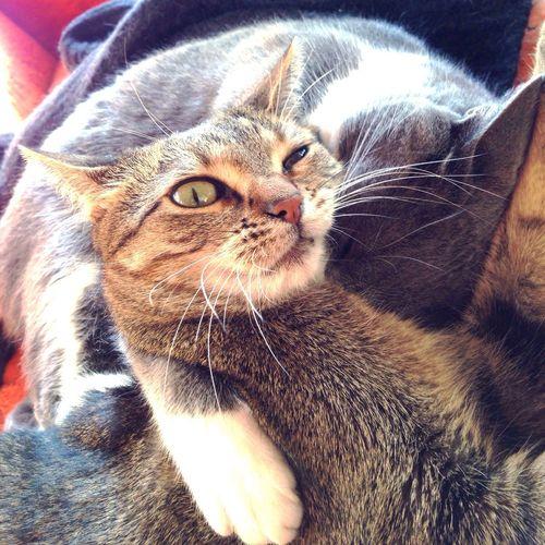 Purehipstamatic Hipstacat Relaxing Mycat