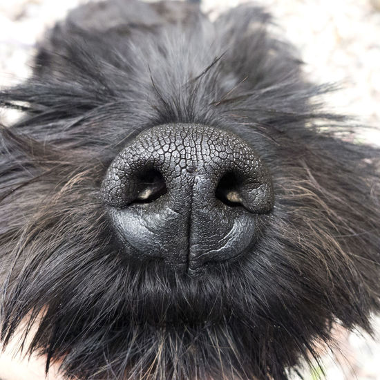 I smell you! Animal Body Part Animal Head  Animal Nose Animal Themes Black Close-up Dog Domestic Animals Fur No People Nose Nostril One Animal Pets