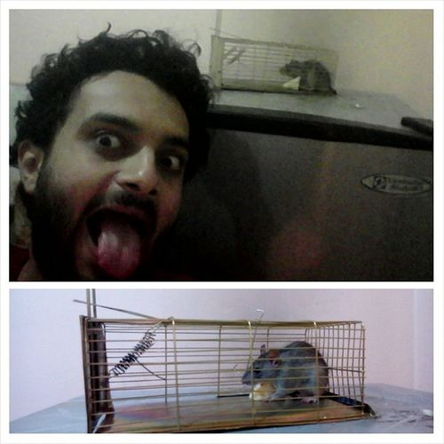 Photogrid Mouse_trap Masyada Far rat cheese victory msktoooooo instaselfie selfie