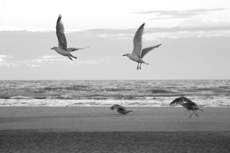 Birds flying high, you know how I feel. Sea Seagull Birds Good Feeling Seaside Flying TakeOff Nature Water Blackandwhite Black And White Black & White Blackandwhite Photography Black And White Photography Black&white Showcase July Canon Canonphotography Canon 70d Canon_photos Canon_official Canon Camera Canon EOS 70D Market Bestsellers July 2016