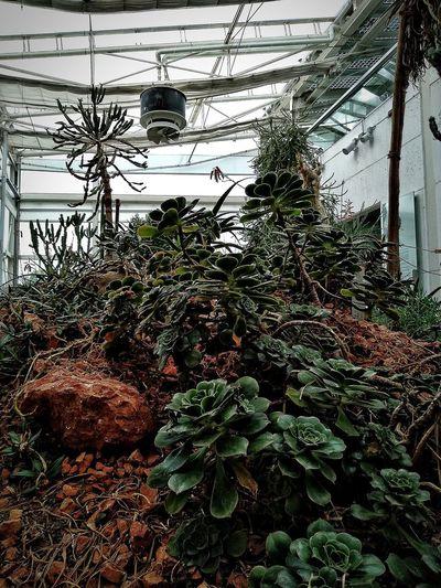 Padova, Aprile 2019 Hdr_Collection City Botanical Garden Trees Plant Built Structure
