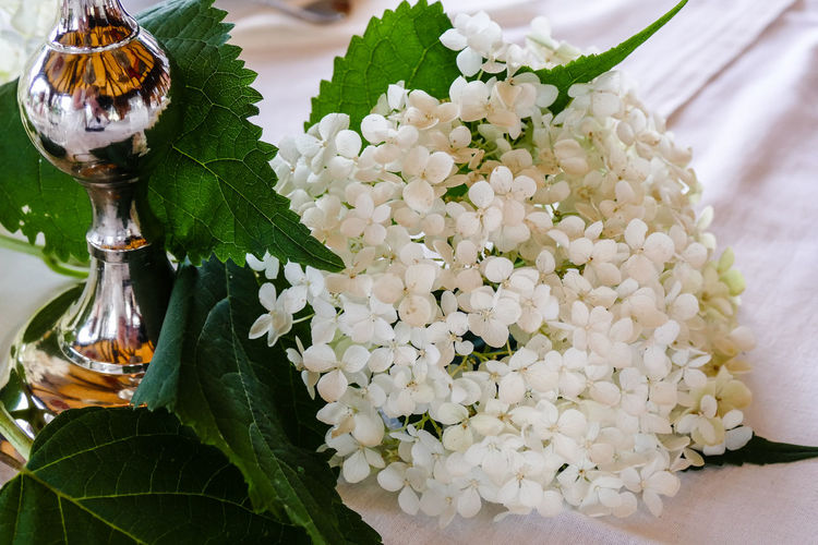 White Flower Beauty In Nature Blooming Blossom Close Up Close-up Decoration Decoration With Flowers Flower Focus On Foreground Freshness Hydrangea In Bloom Nature No People White Color White Flower White Hortensie White Hydrangea