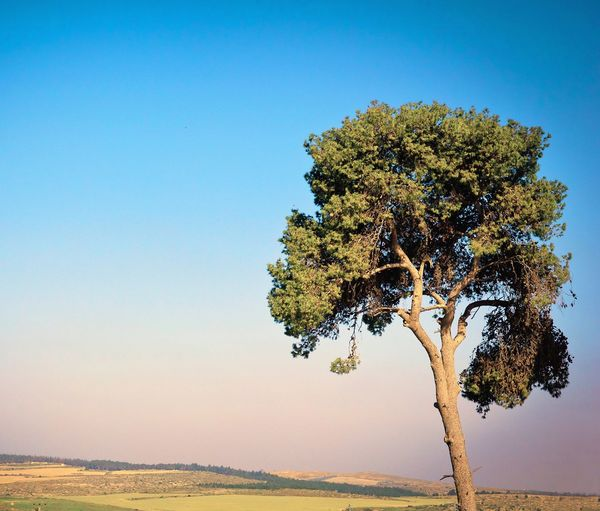 Tranquility Nature Blue Day Sky Summer Clear Sky Israel Tree Lonely Loneliness Branches Ecology
