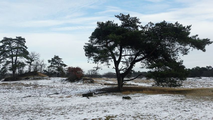 Tree Nature Day Landscape No People Tranquility Sky Sand Outdoors Holland 3XSPUnity Winter Thenetherlands
