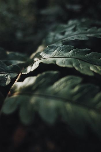 Close-up of plant leaves on land