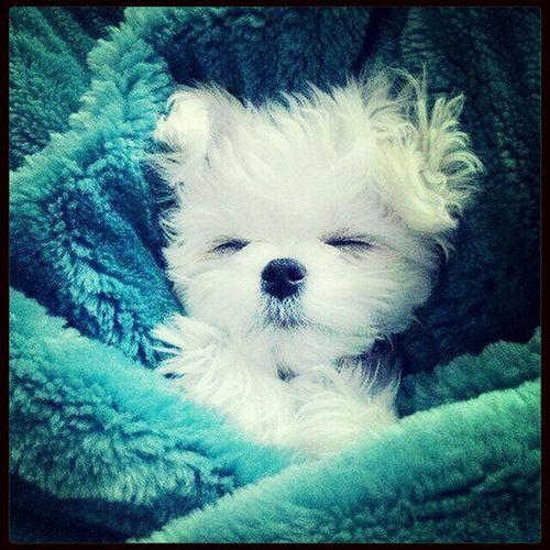 Boa noite! Bons sonhos pra gente né ✌??? Sono Beijos Pra Vcs <3