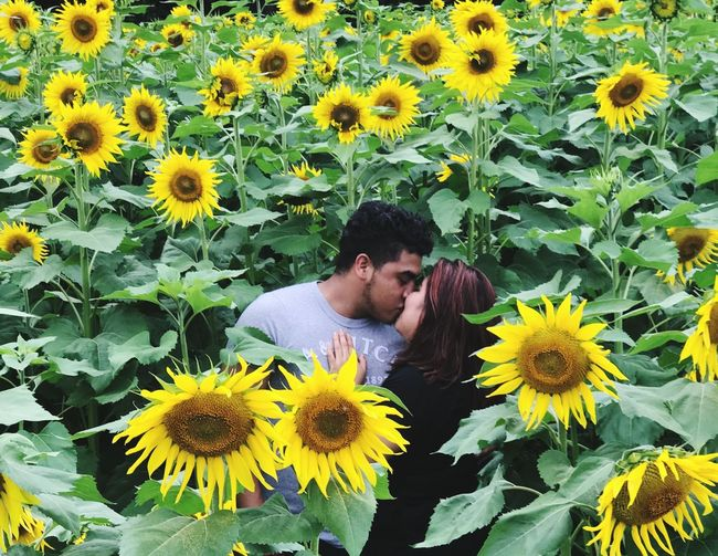 Couple Kissing While Standing By Sunflowers