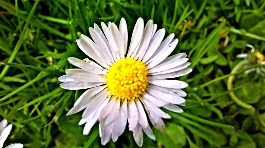 Close-up Flower Fragility Freshness Petal Springtime Yellow