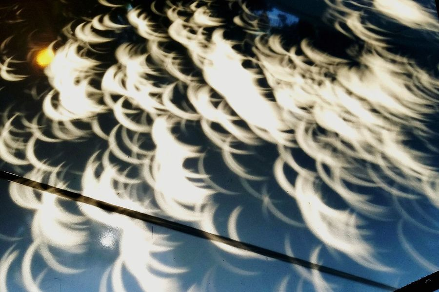 Refraction Shadows Trees Eclipse 2017 Eclipse Shadows Eclipse Shadows Through The Trees
