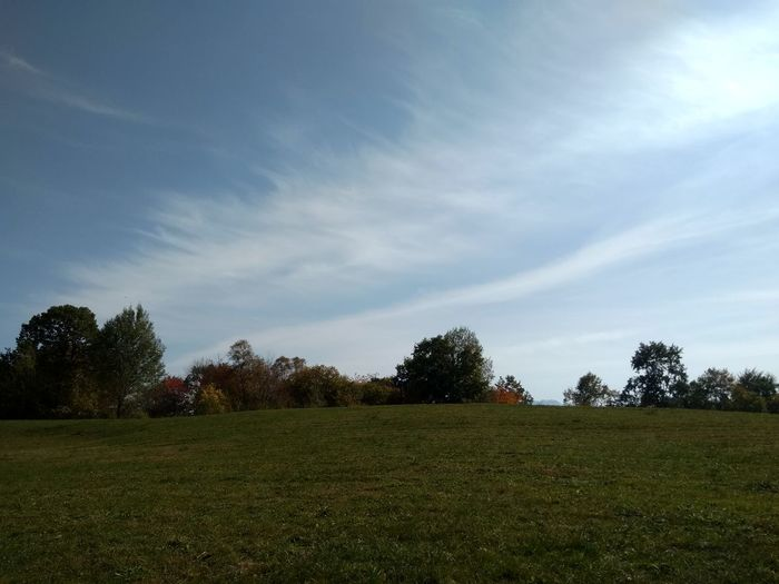 Sky Clouds Tree Sport Soccer Field Playing Field Field Agriculture Sky Grass