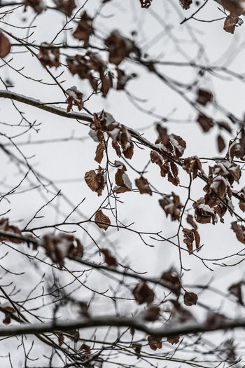 Close-up of frozen plant on snow covered tree