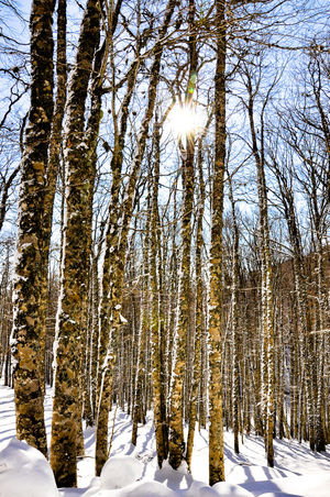 Maxepersonalphoto Lifeintechnicolor HDR Italia Paesaggio EyeEmNewHere Shades Of Winter Neve Eyemphotography Winter Sun Basilicata 2018 Suditalia Shades Of Winter Snow Winter Cold Temperature Tree Nature Pinaceae Beauty In Nature Forest No People Outdoors Pine Tree Landscape Tranquility Scenics Tree Trunk Sky