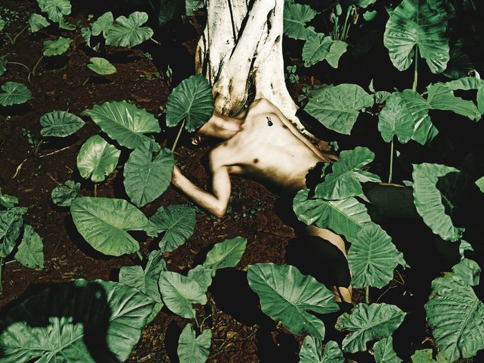 High Angle View Of Naked Man Lying Down Amidst Leaves