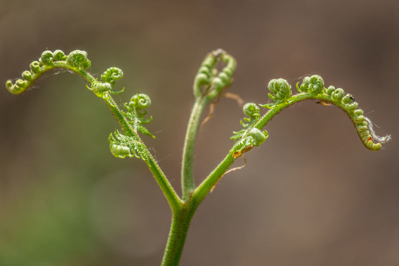 Close-up of plant growing outdoors