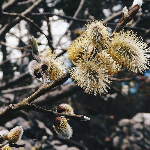 Frühling im Wald! Inbloom Spring Springtime Plants Forest Eibsee Germany Infocus VSCO Garden_Explorers Nature Hiking Attentiontodetail Photography Instagoodmyphoto Flowerstagram Birdsloveit Soft Cute
