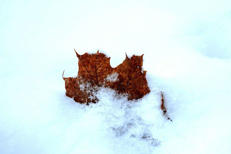 Winter 2016 Wintertime January Showcase: January Snowy Winter Leaf Winter Leaves